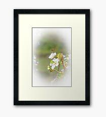 Hovering Bee Framed Print