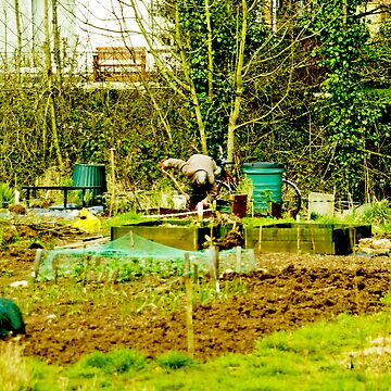 The Allotment by CatherineV