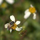 Little Worker Bee by Virginia N. Fred