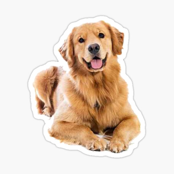 ¡Nos encanta Golden Retriever! Pegatina