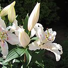 Heavenly Perfume - Fragrant Oriental Lily von BlueMoonRose