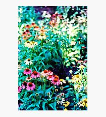 Flowers in Color Photographic Print