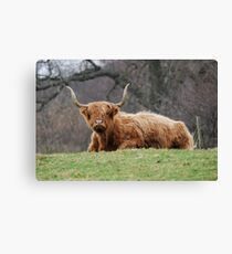 Big Beastie Canvas Print