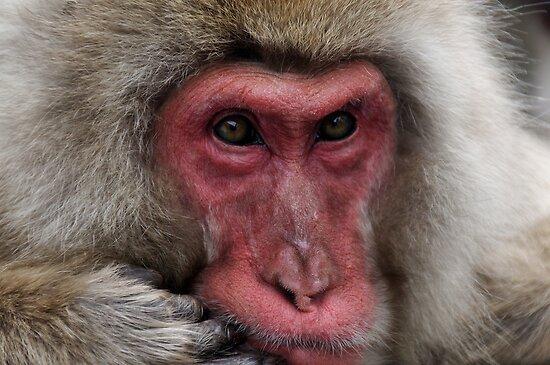 Middle Aged Monkey Man by Robert Mullner