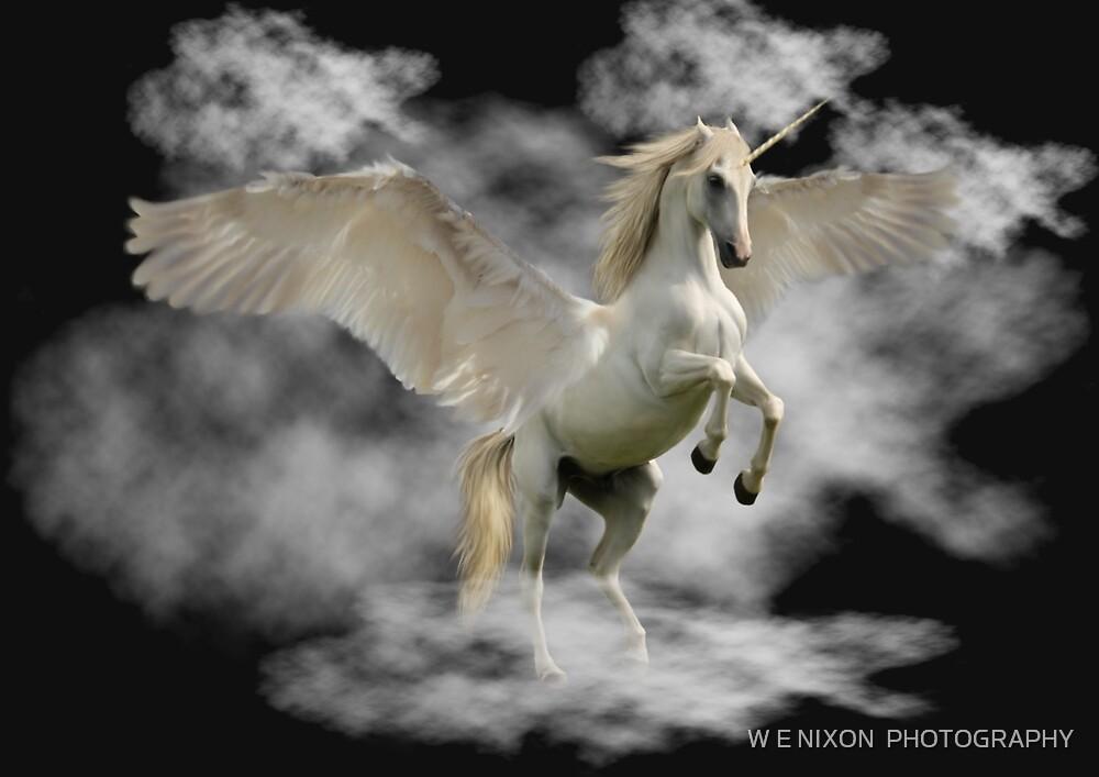 Unicorn by W E NIXON  PHOTOGRAPHY