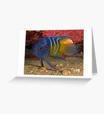 Eastern Blue Devilfish Greeting Card