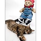 Ringo Cat & Dr. Who Bear by MarkYoung
