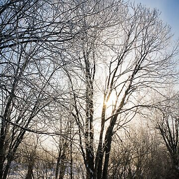 A sunlit tree in a frost. by GermanS