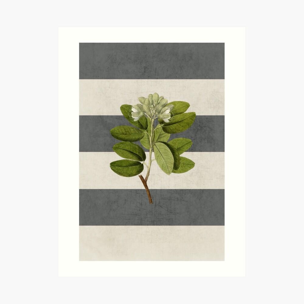 botanical stripes 5 Art Print