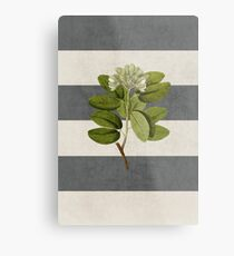 botanical stripes 5 Metal Print