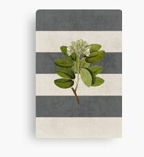 botanical stripes 5 Canvas Print
