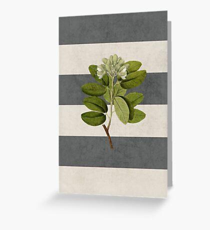 botanical stripes 5 Greeting Card