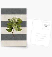 botanical stripes 5 Postkarten