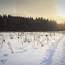 Snowfall in the field. by GermanS