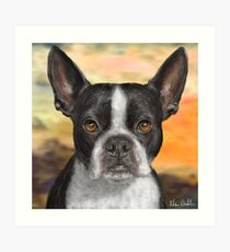 Painting of a Black and White Boston Terrier, with Orange Background Art Print