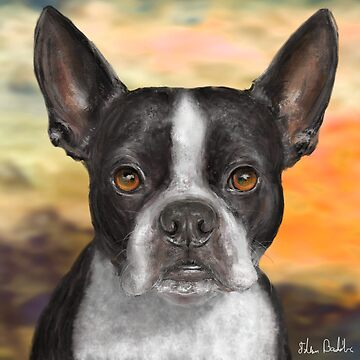 Painting of a Black and White Boston Terrier, with Orange Background by ibadishi