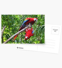 Scarlet Macaws: Ups and Downs Postcards