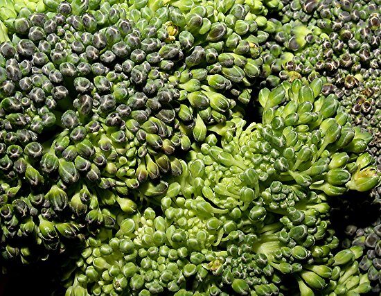 Broccoli Macro by Stephen Thomas