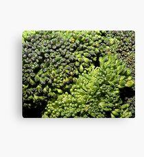 Broccoli Macro Canvas Print
