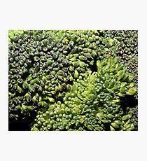 Broccoli Macro Photographic Print