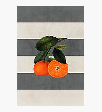 botanical stripes 6 Photographic Print