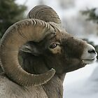 Ram's Pose by Ken McElroy