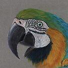 Macaw by Kate Wilkey
