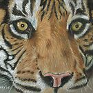 Tiger by Kate Wilkey