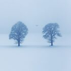 Flying Gull ... ... by Angelika  Vogel