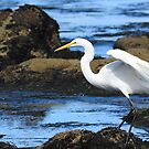 Reflective Egret by eyes4nature