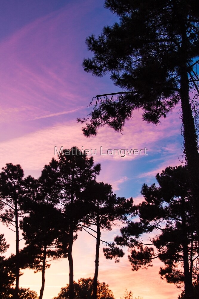 Sunset - Clouds, wind and trees #2 by Mathieu Longvert