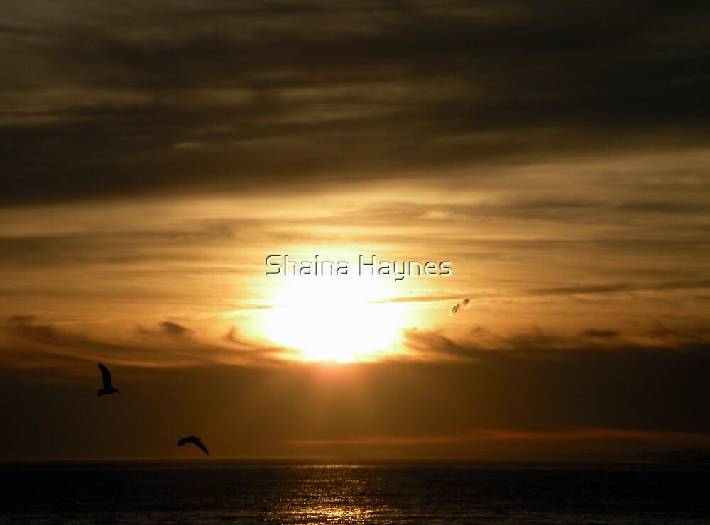 Rays of Light by Shaina Haynes