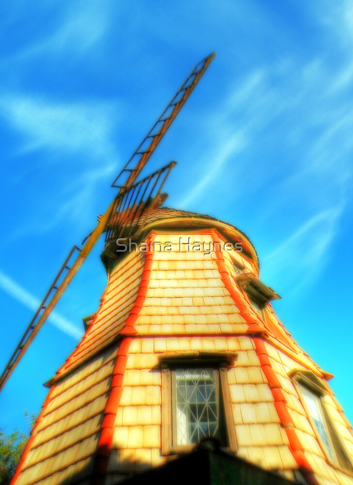 Windmill in the Sun by Shaina Haynes