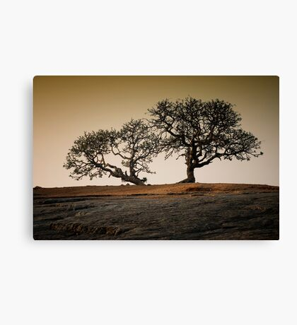 The Fool On the Hill Canvas Print