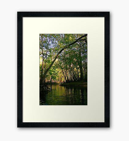Springtime in Florida Framed Print