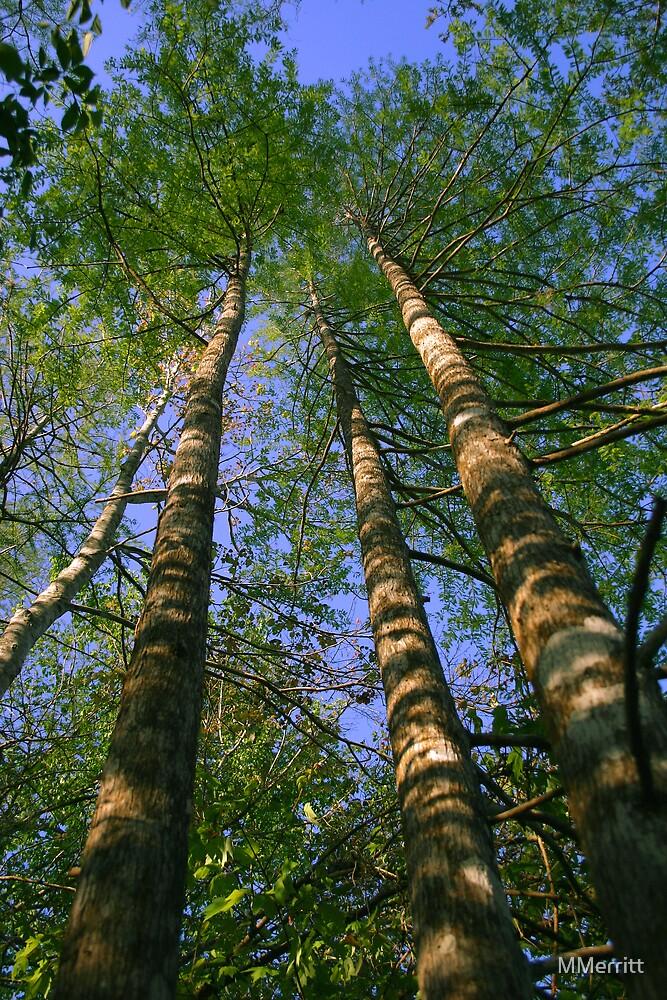 Three Trees by MMerritt