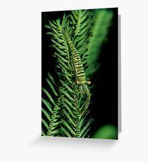 Featherstar Shrimp Greeting Card
