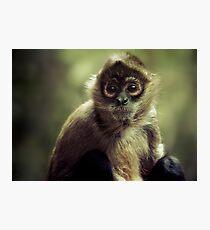 Black Handed Spider Monkey Photographic Print