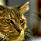 """Daisy...""""Stop taking photos Dad and feed me"""". by Leigh Nelson"""