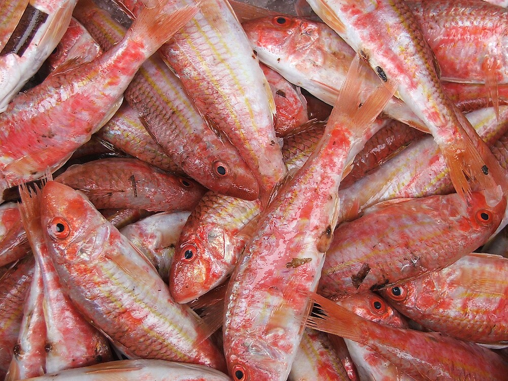 Red Mullet by FritzFitton