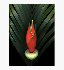 Palm of Fire Photographic Print