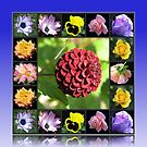 Summer Flowers Collage in Reflection Frame featuring Dahlia von BlueMoonRose