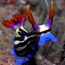 Devil Nembrotha Nudibranch by daveharasti