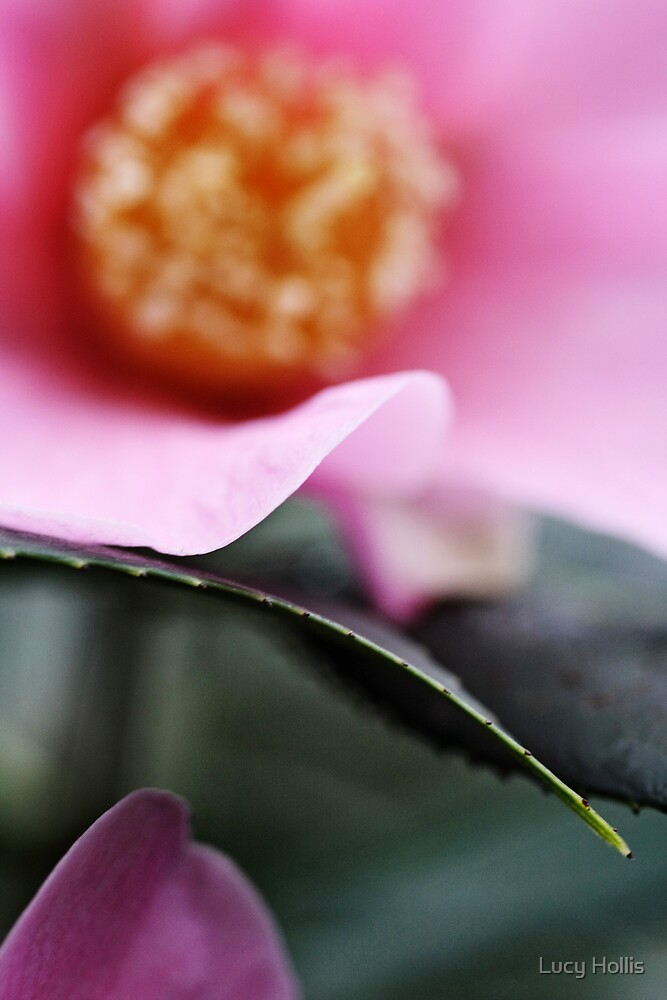 Camellia by Lucy Hollis