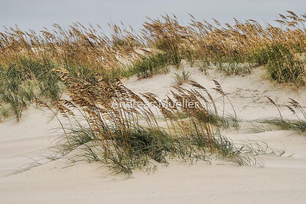 North Carolina Dunes by Andreas Mueller
