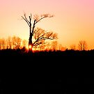 Entish Days End by velveteagle