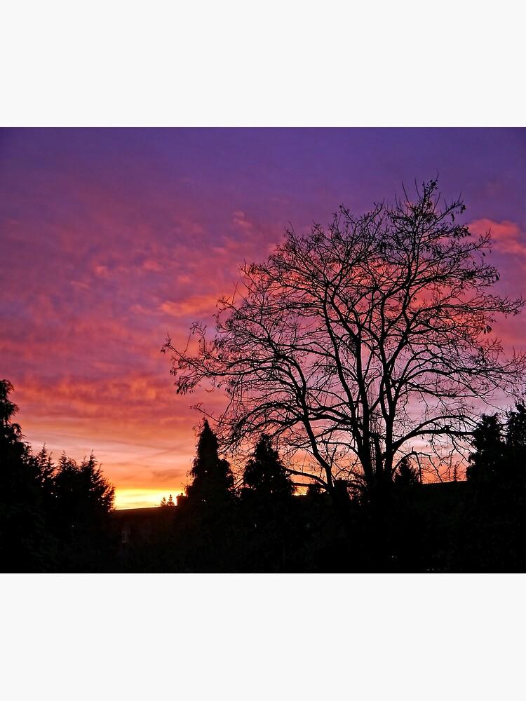 Purple Sunset by ScenicViewPics