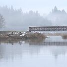 Wetland Foot Bridge by Ran Richards