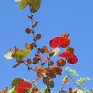 Leaves in the sun by brendalynn52