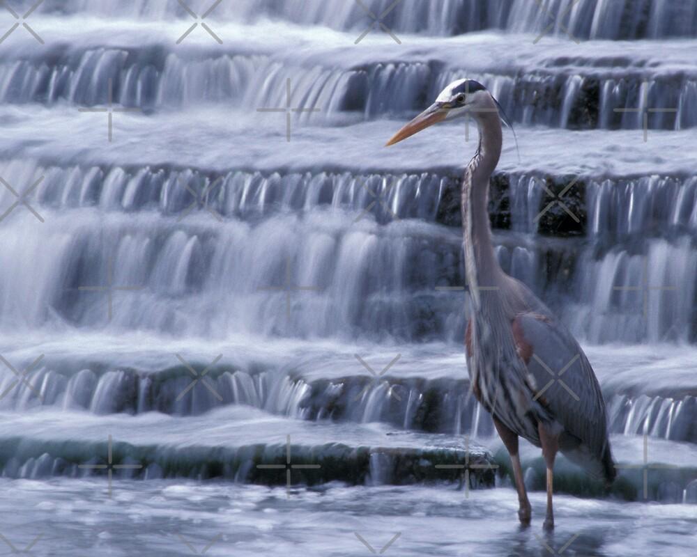 Great Blue Heron by Bill Spengler
